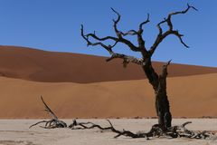 Unbelievably fantastic landscape of the Dead Vlei in the Namib Desert, Namibia royalty free stock photo