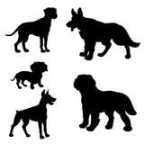 Black silhouette of dogs Dachshund, Dalmatian, Doberman   Stock Photo