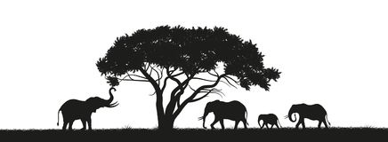 Black silhouette of elephants in savannah. Animals of Africa. African landscape. Panorama of wild nature. Black silhouette of elephants and trees in the savannah royalty free illustration
