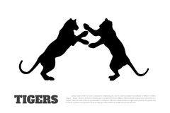 Black silhouette of fighting tigers Stock Photos