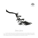 Black silhouette of fir tree branches on a white background. Dra. Wing of pine. Vector illustration Stock Photo