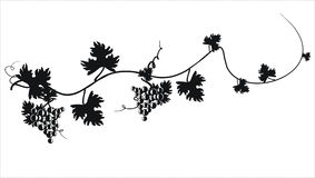 Black silhouette of grapes . Vector illustration. Stock Photography