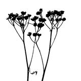 Black silhouette of herbaceous dried plant on white background. The silhouette of a wild medicinal plant resembling the letter W. Element for card, design Royalty Free Stock Photo