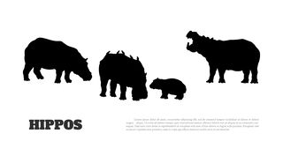 Black silhouette of hippopotamus family on white background. Isolated scene with hippos. Landscape of african animals. Black silhouette of hippopotamus family on vector illustration