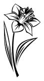 Black silhouette of narcissus flower. Vector. Stock Images