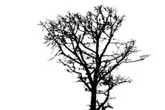 Black silhouette of an old fir tree. On white background Royalty Free Stock Photo