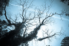 Black silhouette of old tree stock photography