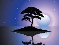Black silhouette of old tree at night scene Stock Image