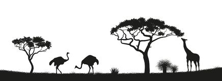 Black silhouette of ostrich, giraffe in savannah. Animals of Africa. African landscape. Panorama of wild nature Stock Photo