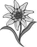 Black silhouette outline edelweiss (leontopodium) flower, the symbol of alpinism Royalty Free Stock Images