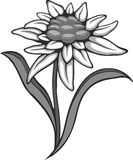 Black silhouette outline edelweiss (leontopodium) flower, the symbol of alpinism Stock Photo