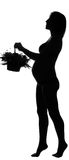 Silhouette of pregnant woman with the flowers. Black silhouette of pregnant woman with a basket of flowers on white background royalty free stock images