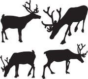 Black silhouette of reindeer Stock Image