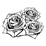 Black silhouette rose Stock Photography