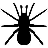 Black silhouette of a spider Stock Photo