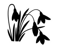 Black silhouette of spring flower. The first snowdrops Galanthus. Flowers for decoration. Vector illustration isolated on white ba. Ckground. Web site page and Stock Images
