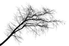 Black silhouette of tilt leafless tree on white. Black silhouette of tilt leafless tree isolated on white background royalty free stock image