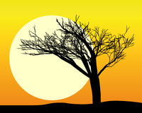 Black silhouette of a tree. In the sun and the sky orange Stock Image