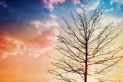 Black silhouette of a tree against a sunset, lovely landscape of nature Royalty Free Stock Photo