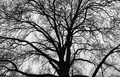 Black Silhouette of Tree Background Stock Photos