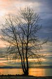Black silhouette of a tree without castings against the background of an evening landscape with an orange river royalty free stock photos
