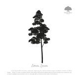 Black silhouette of a tree on a white background. Forest trees Royalty Free Stock Images