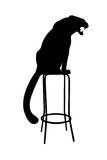 Black silhouette of wild cat sitting. On a chair Stock Photography