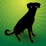 Black silhouetted dog Royalty Free Stock Images