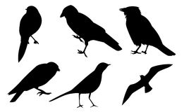 Black silhouettes of birds Stock Images