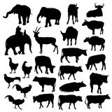 Black silhouettes of elephants, cows, bulls Royalty Free Stock Photography