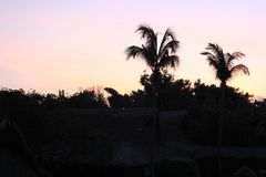 Black silhouettes of palm trees at dawn royalty free stock image