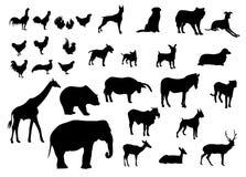 Black silhouettes set of animals various types on white background royalty free illustration