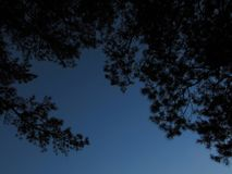 Black silhouettes of trees and one branch on the left against the dark blue evening sky in a park. Black silhouettes of trees and one branch on the left against royalty free stock photo