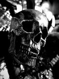 Black skull close up. In Black and White stock photos
