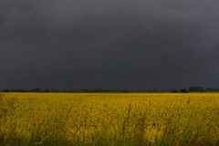 Black sky over wheat field. Black,stormy sky over golden wheat field Stock Image