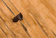 Black small bat with straightened leather wings against the background Royalty Free Stock Photos