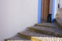 Black small dog protecting the entrance of the house stock photography