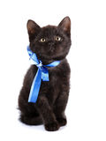 Black small kitten with a blue bow. Royalty Free Stock Photos
