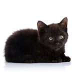 Black small kitten. Royalty Free Stock Photography