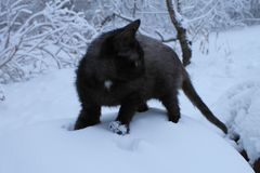 Black cat sitting outside in the snow stock photos