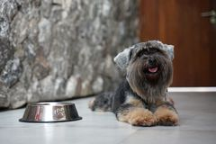 Black small mixed breed dog smiling and lying down on the floor with stainless steel dog bowl. By her side stock images