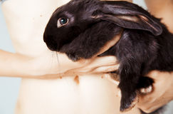 Black small rabbit Portrait Royalty Free Stock Images