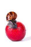 Black snail on red apple Royalty Free Stock Photography