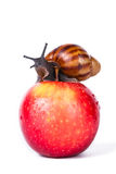 Black snail on red apple Stock Photos