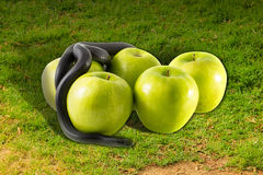 Black snake and apples on green grass Royalty Free Stock Photography