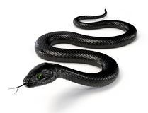 Free Black Snake III Stock Photos - 54930923