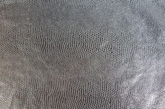 Black snake skin Royalty Free Stock Photography