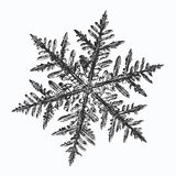 Black snowflake on white background. This illustration based on macro photo of real snow crystal: small stellar dendrite with fine hexagonal symmetry, complex stock illustration