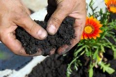 Black soil Stock Image
