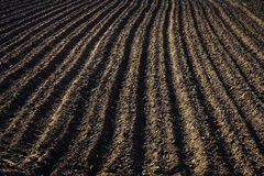 Black soil plowed field. Earth texture Royalty Free Stock Images